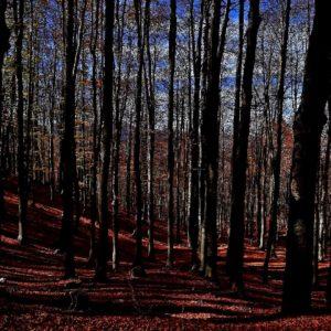 """""""la Foresta messa sugli... At-tenti, dalla Natura"""" - """"the Forest on the ... At-Tent, by Nature"""""""