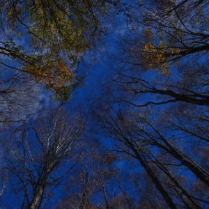 """""""dal Basso..."""" -  """"from below..."""""""