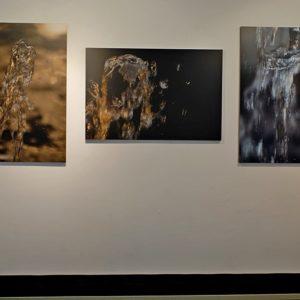 """nel Museo Civico di Zoologia di Roma verrà esposta la fotografia di centro """" il Pit Bull ... """""""