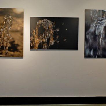 """exhibition only  Zampilli di … Vita – (Gush of … Life) Galleria """" Le Opere """""""