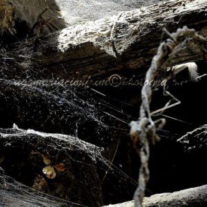 La cantina... - The cellar ... copyright di Ugo Maria Cionfrini