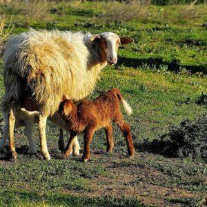 Amore... della mamma - Mother's love ...