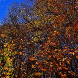 """""""Colori... d'Autunno"""" - """"Autumn colors"""""""