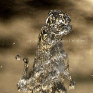 CARLINO ...  zampillo d'acqua della serie degli Zampilli di ... Vita