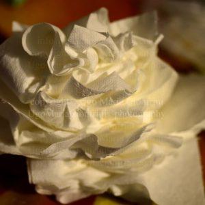 il Fiore del ... raffreddore - the Flower of ... cold