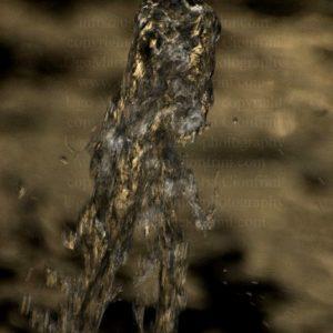 T-REX ...  zampillo d'acqua della serie degli Zampilli di ... Vita