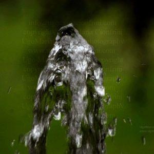GORILLA CON ... GORILLINO  zampillo d'acqua della serie degli Zampilli di ... Vita