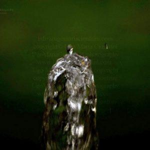 INDOSSATRICE ... IN PASSERELLA -  zampillo d'acqua della serie degli Zampilli di ... Vita