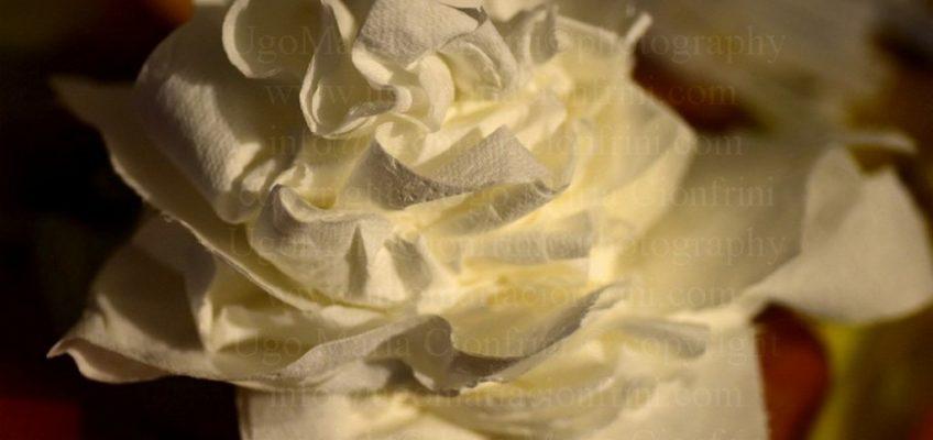 il Fiore ... del Raffreddore /  the Flower ... of the Cold